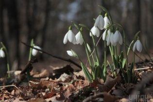 Учені розповіли, як уберегтися від весняної алергії