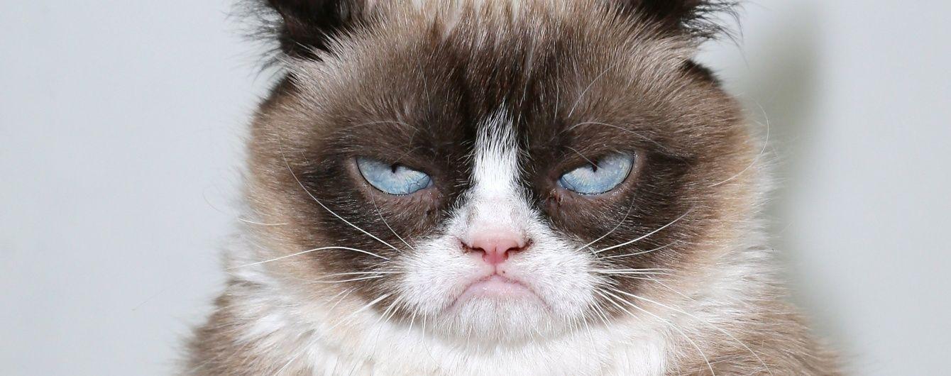 Россельхознадзор не пропустил в Крым пятерых котов, черепаху и сало из Украины