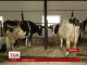 Канада планує інвестувати 20 мільйонів доларів в розвиток молочного бізнесу
