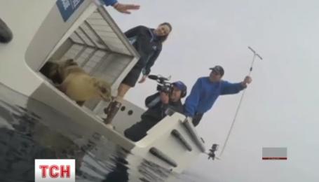 У Каліфорнії випустили морське левеня, яке прославилося візитом до ресторану