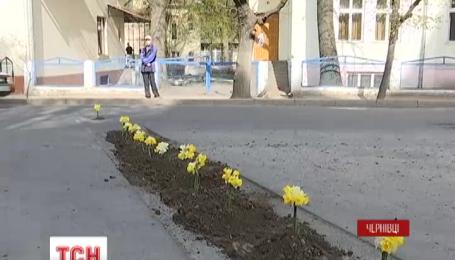 В Черновцах местные студенты высадили цветы прямо в выбоины на дороге