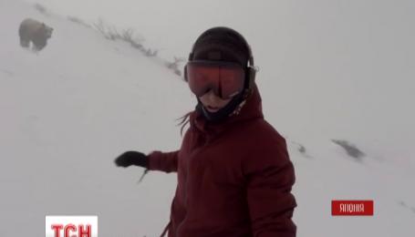Медведь, который гонится за сноубордисткой, покоряет социальные сети