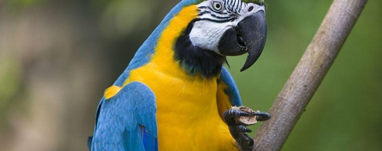 В Кувейте попугай рассказал жене об измене мужа с горничной