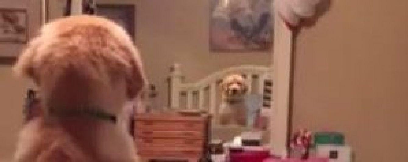 """Юзерів потішило відео кумедного собаки, який """"змагається"""" з дзеркалом"""