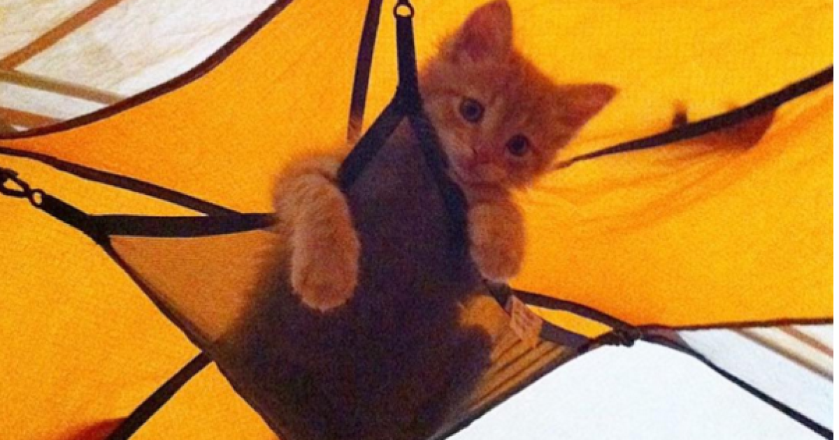 @ Camping With Cats