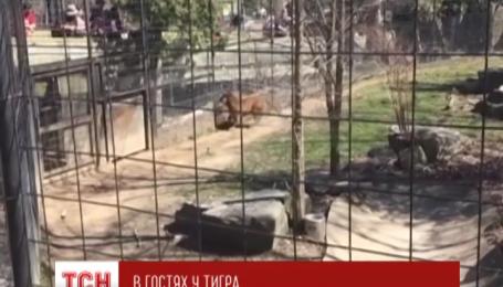 В Торонто женщина прыгнула в вольер к тигру