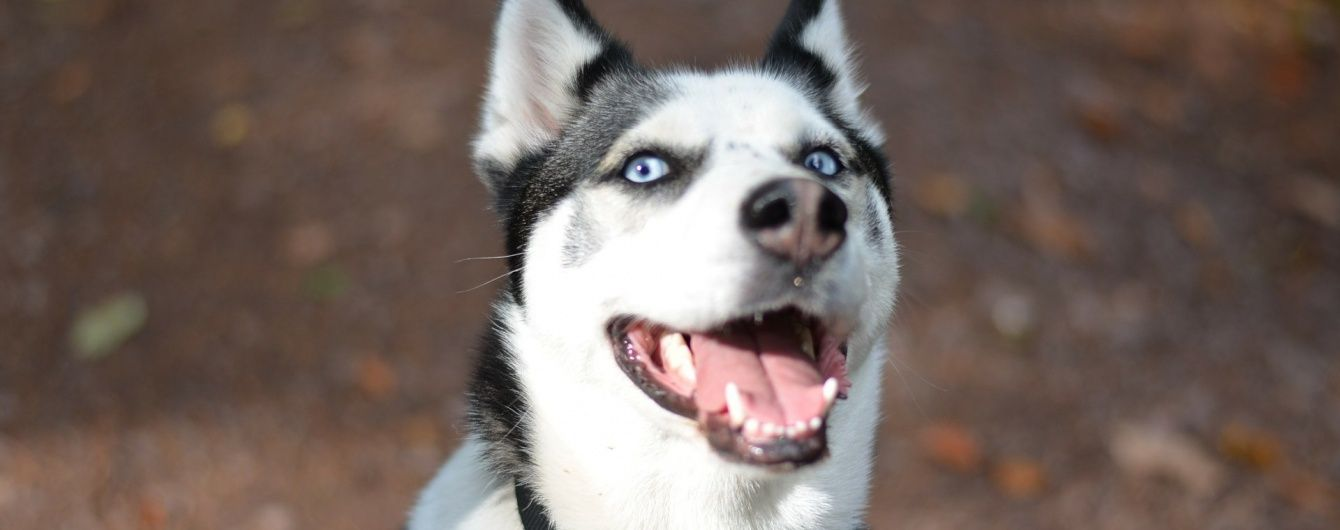 В Великобритании пес включил микроволновку и устроил пожар