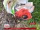 У Коростені біля будинку керівника районного геокадастру виявили розтяжку з гранатою РГД-5