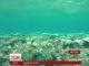 Вчені дізналися, чому Великий Бар'єрний риф втрачає яскраве забарвлення