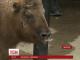 У Миколаївському зоопарку вперше до відвідувачів вийшов малюк такінів