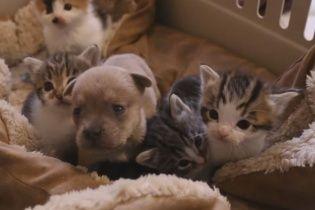 Заботливая кошка выкормила щенка-сироту, мама которого погибла в аварии