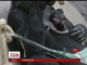 У зоопарку Праги на світ несподівано з'явилася маленька горила