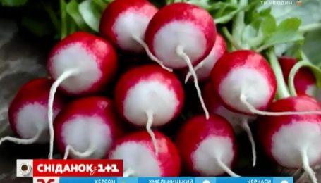 В Украине стремительно падают цены на редис