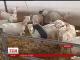 У Японії кіз почали здавати в оренду, щоб доглядали за газонами та садами