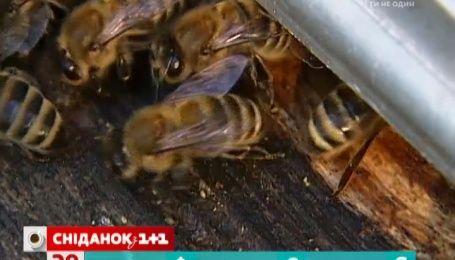 Українські фермери наймають на роботу бджіл