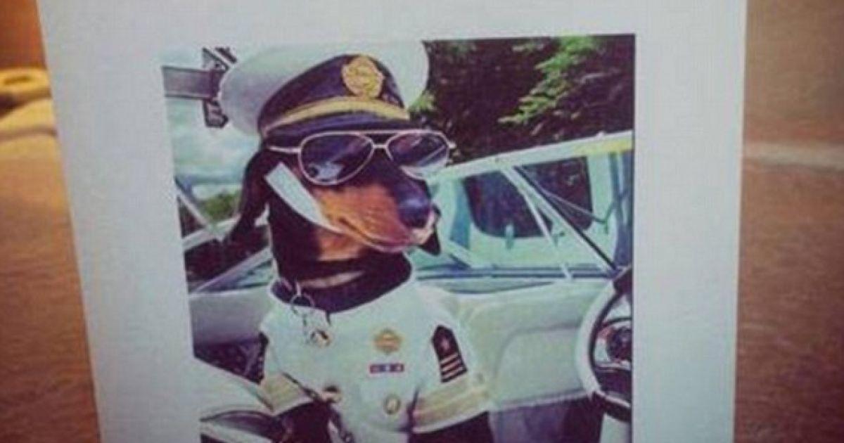 Бізнесмен хотів побачити фото собаки у капітанському костюмі. @ Daily Mail