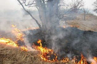 Россию охватил огонь: в Приамурье горят леса и села