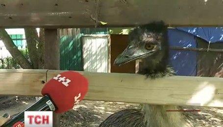 Відомий страус Федір з позивним Кабул став татом