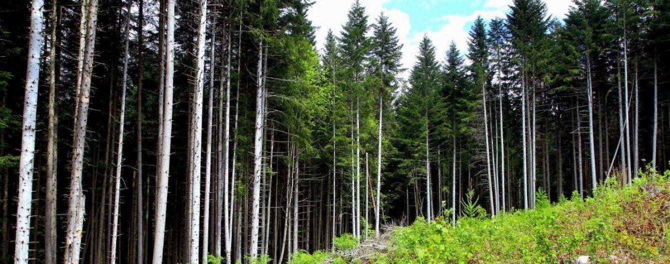 На Львівщині СБУ викрила незаконну вирубку дерев на державному підприємстві