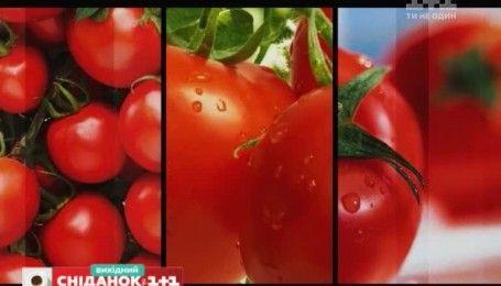 Коли краще садити та як доглядати за томатами – Зелена ділянка