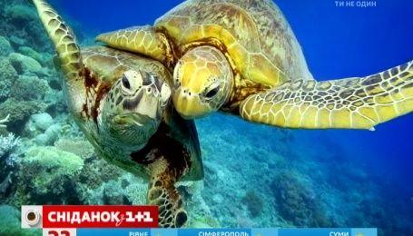23 мая отмечается Всемирный день черепахи