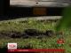 У Львові у дворі будинку колишнього регіонала стався вибух
