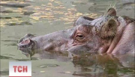 В Киевском зоопарке умерла старейшая бегемотиха планеты