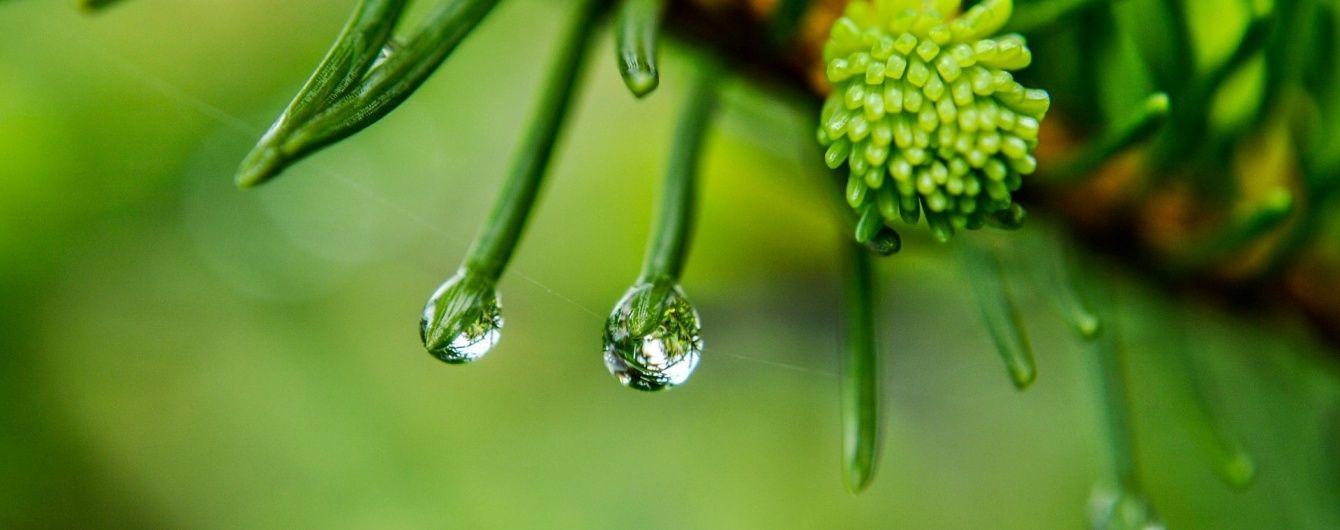 У середу майже в усіх регіонах України пройдуть дощі. Прогноз погоди на 25 травня