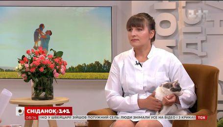 Ветеринар Вікторія Шерстюк розказала про правильний догляд за улюбленцем після кастрації та стерилізації