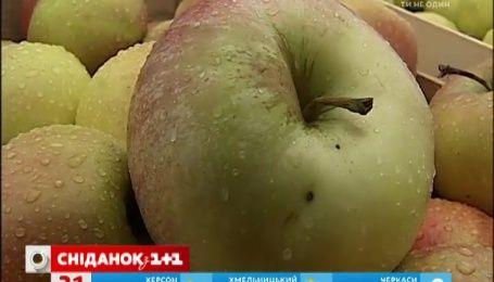 Українські яблука досягли рекордно низької ціни за останні 6 років