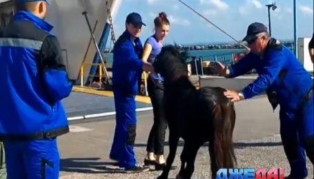 Даже пони не хочет ехать в Крым