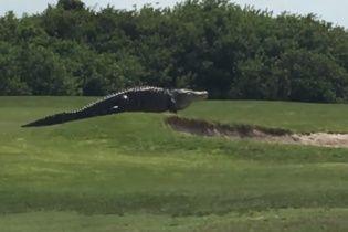 """""""Денег нет, вы держитесь"""" на банкоматах и прогулка аллигатора полем для гольфа. Тренды соцсетей"""