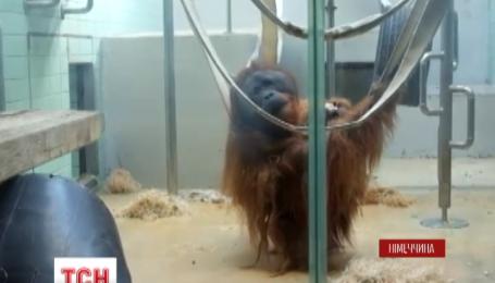 В зверинце города Штутгарт появилась служба видеосвиданий для обезьянок
