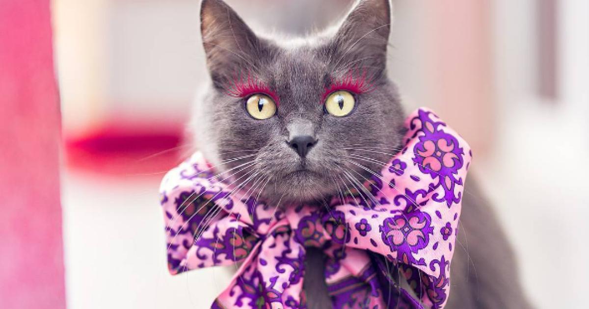 гламурная кошка картинки стеклянный шар