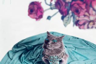"Зіркою Instagram стала гламурна кицька із незвичним ""мейкапом"""