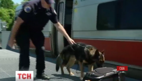 Близ Нью-Йорка открыли тренировочный центр для собак