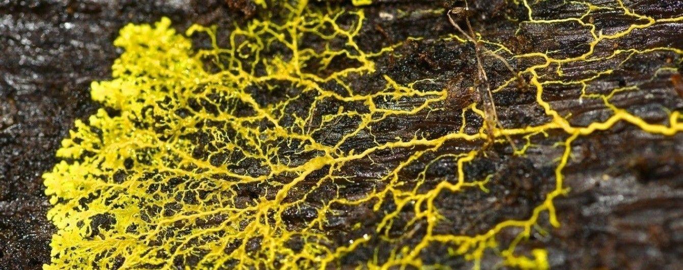 В квартирах киевлян размножился опасный патогенный грибок