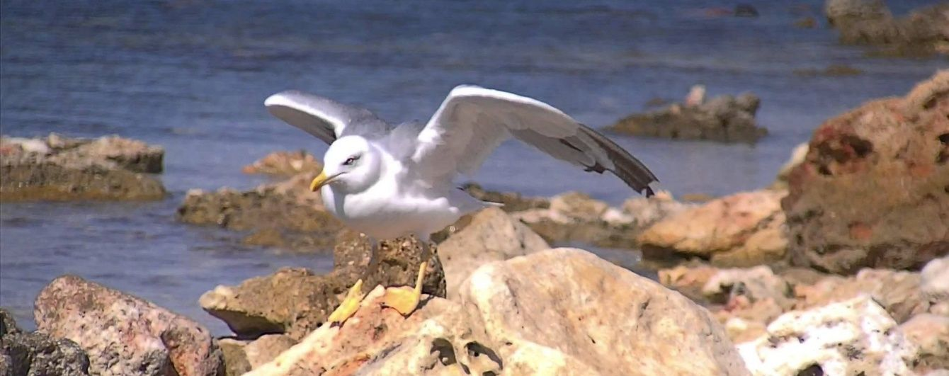 Очевидцев возмутил жестокий турист, который насильно накормил чайку для фото