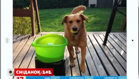 Актуальный интернет: дом на волнах и игрушка для собаки