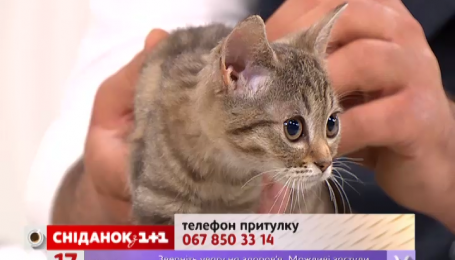 Кошечка Ася и ее сестренка Аля ищут любящую семью
