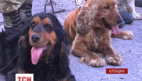 В Херсоне собаки-пограничники подтверждали свою квалификацию