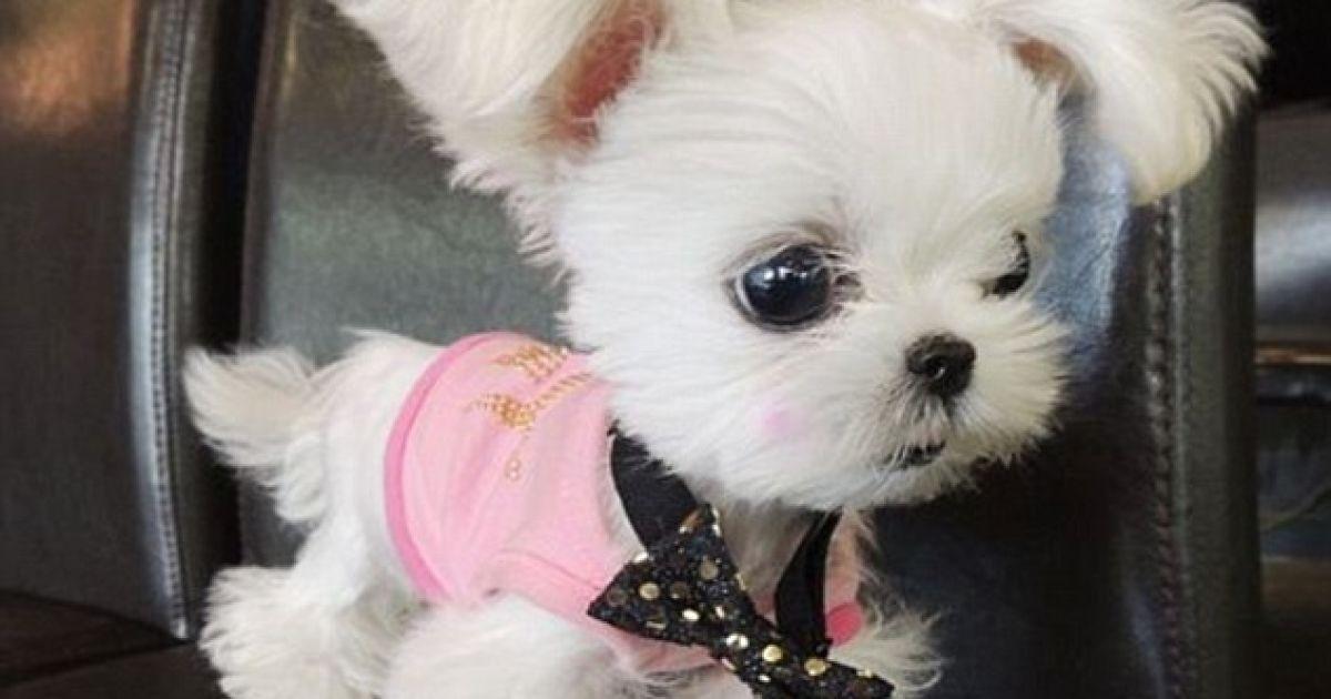 фото собак которые не растут маленькие сам российский игрок