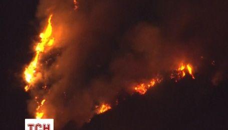В Калифорнии выгорели тысячи гектаров леса