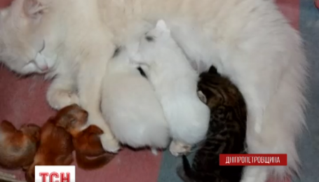 В Кривом Роге кошка стала названной мамой для маленьких бельчат