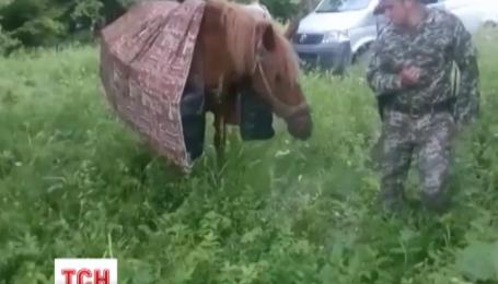 На Буковине контрабандисты лошадьми пытались переправить ящики с сигаретами через границу
