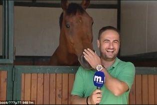 Товариський кінь наполегливо зривав роботу грецькому журналістові