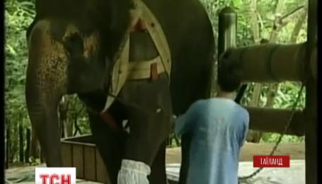 У Таїланді молода слониха отримала протез