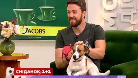 """Сегодня всеукраинский праздник - День """"Возьми собаку на работу"""""""