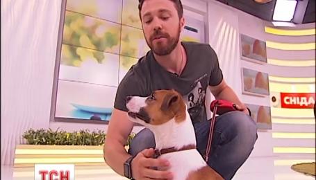 Во что может превратиться рабочий день, если в офис придут вместе собаки и люди