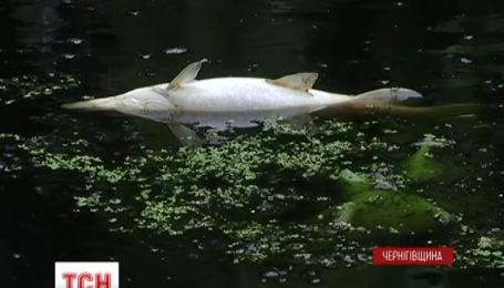 С реки Остёр достают тонны мертвой рыбы